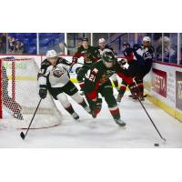 Vancouver Giants centre Milos Roman squeezes around the net in pursuit of a Prince George Cougar